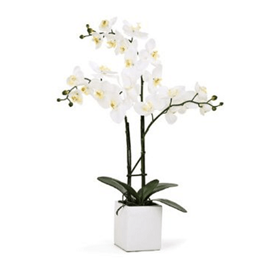 3 white Phalaenopsis orchid funeral plant