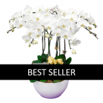 10 stems white orchid funeral plant